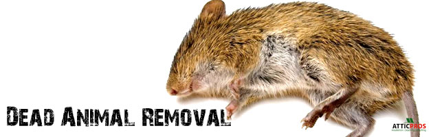 dead-animal-removal