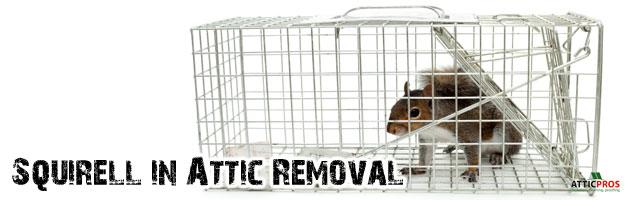 squirell-in-attic-removal